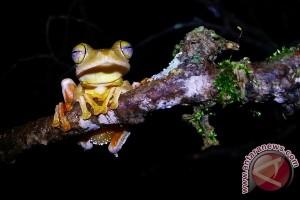 10 persen katak kalimantan terancam punah