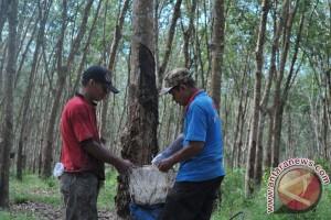 Harga karet di Ogan Komering Ulu naik