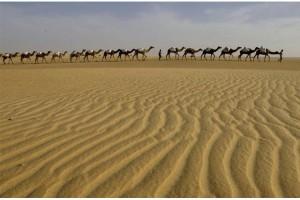 Negara Arab serukan upaya bersama dalam menghadapi perubahan iklim