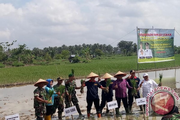 Wali Kota Palembang tanam padi sawah lebak
