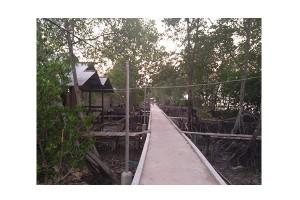 """Pulau Cawan """"menyimpan"""" hutan bakau terbesar Riau"""