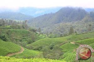 Lahan kritis di Bangka mencapai 26.000 hektare