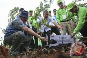 Pemprov Sumsel prioritaskan restorasi gambut tiga Kabupaten