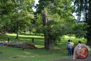 Kabupaten OKU Sumsel tanam 300 pohon pelindung