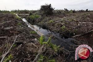 Walhi: Rawa gambut lahan produktif