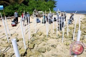 Mahasiswa Bengkulu tanam ratusan pohon Mangrove