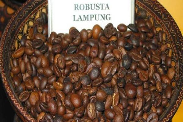 Hari kopi internasional angkat kopi lampung