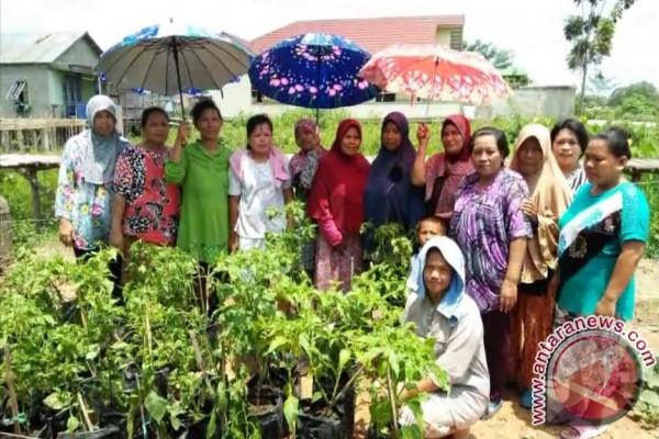 Dinas Pertanian perbanyak wilayah kampung cabai