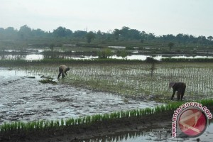 Pengamat: Meningkatnya perubahan iklim resiko terhadap pertanian