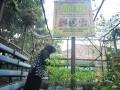Warga memetik cabai rawit di kebun sehat olahan Kelompok Wanita Tani Talang Jawa Kecamatan Gandus Palembang, Sumsel, Kamis (10/8). Kampung iklim yang berada di pinggiran kota ini pernah meraih penghargaan karena berhasil dan berkesinambungan melakukan aksi adaptasi dan mitigasi perubahan iklim mencakup pengendalian banjir, peningkatan ketahanan pangan, penanganan kenaikan muka air laut, pengendalian penyakit terkait iklim. (Antarasumsel.com/Feny Selly/Ag/17)
