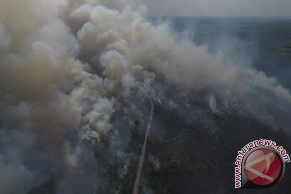Kebakaran lahan gambut terjadi di kawasan Palembang-Inderalaya