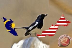 Keberadaan burung kacer langka di Abdya