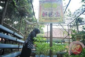 Tekan inflasi, Pemkot Palembang bantu bibit cabai