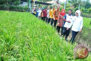 Mahasiswa KKN terlibat pengecatan kampung Warna-warni Palembang
