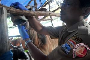Pemeriksaan hewan kurban di 50 titik Palembang