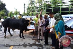 Semen Baturaja bagikan 29 sapi untuk warga