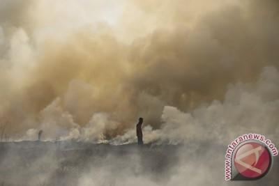 Kebakaran Lahan Di Pulau Negara