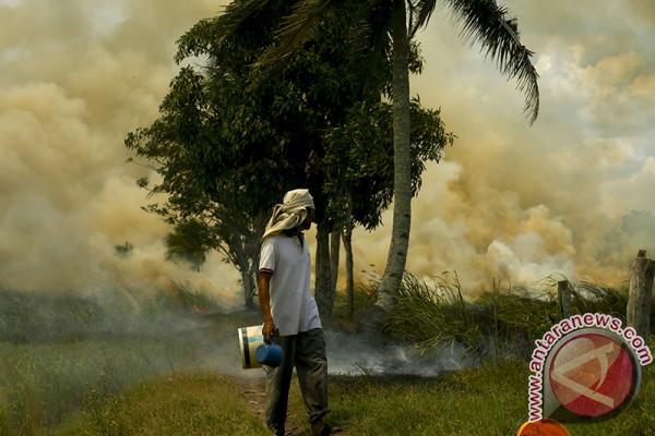 Pemprov dorong pemanfaatan lahan rawan terbakar