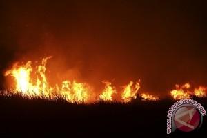 Kebakaran hutan kembali terjadi di Ogan Ilir