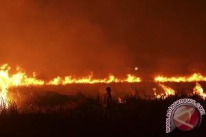 Sumsel prioritaskan pencegahan kebakaran hutan