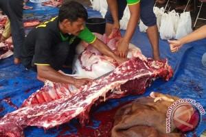 Kabupaten OKI munculkan sentra peternakan sapi