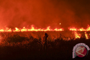 Satu desa di Jambi kebakaran