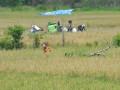 Petani memanen padi di kompleks persawahan di kecamatan Pemulutan Kabupaten Ogan Ilir, Sumsel, Selasa (10/10). Bulog Divre Sumsel dan Babel menargetkan penyerapan pengadaan beras di Sumsel-Babel sebanyak 120 ribu ton selama 2017. (ANTARA Sumsel/Feny Selly/Ang/17)