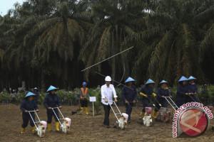 Presiden resmikan ribuan hektare lahan sawit di Muba