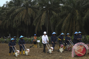 Komoditas kelapa sawit wajib dilindungi