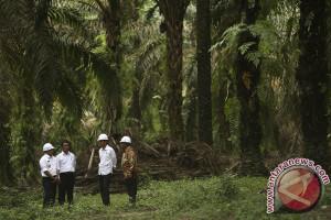 Peremajaan sawit di Musi Banyuasin jadi percontohan nasional