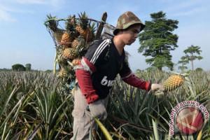 Lahan gambut OKI ditanami tanaman lokal