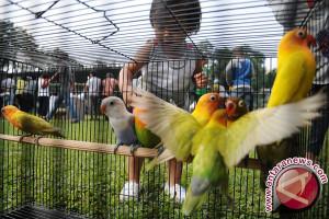 Sejumlah penggemar love  bird jadi pembudidaya
