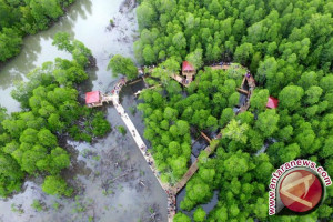 Dinas Kehutanan Tertibkan Perambahan Hutan