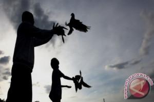 Ternyata burung merpati bisa bedakan ruang dan waktu