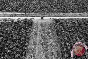 Indonesia tolak keputusan parlemen Eropa terhadap sawit