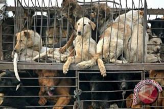 Distan diminta musnahkan anjing pemangsa anak kambing