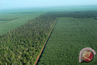 Indonesia miliki hutan produksi 68,85 juta hektare