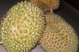 Durian Tabalong juara dua konten durian
