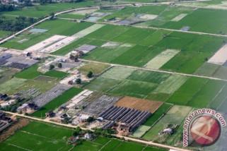 Lahan pertanian di Kota Palembang berkurang
