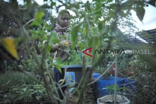Kampung Holtikultura Mitra Bina Lingkungan Pusri