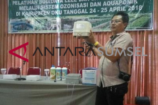 Jejak indonesia ajak masyarakat budidayakan ikan lele