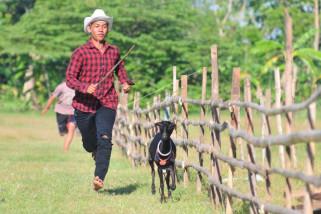 Denda ternak liar naik 1.000 persen
