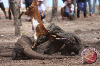 Jangan takut ke Taman Nasional Komodo