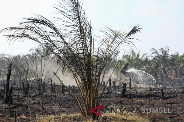 Kebakaran Lahan Gambut Diperkebunan Sawit