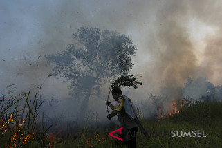 Walhi Sumsel minta adil tindak pembakar lahan
