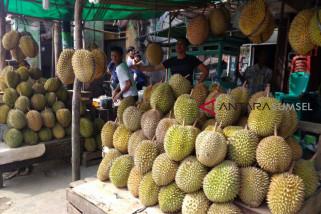 Pedagang durian raih untung besar