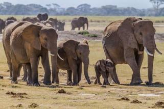 Satu warga meninggal diamuk gajah liar