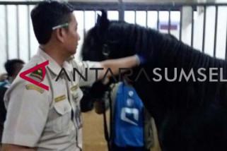 Kementan siapkan karantina kesehatan kuda Asian Games