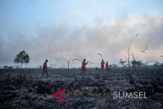 Sumsel akan restorasi lahan gambut tujuh Kabupaten
