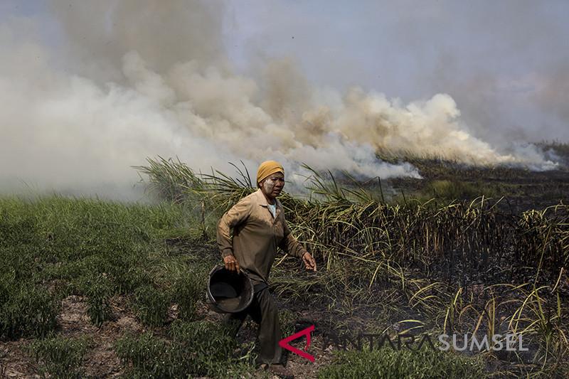 Kebakaran Lahan Di Muara Baru